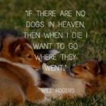 Amazing Dog Quotes