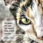 Animal Eyes Quotes