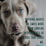 Animal Quotes Inspirational