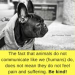 Be Kind To Animals Quotes Pinterest