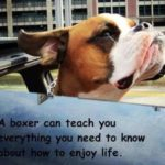Boxer Dog Quotes And Sayings