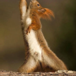 Caption For Squirrel Photo Tumblr
