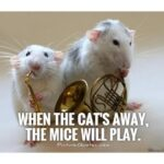 Cat And Mouse Quotes Funny