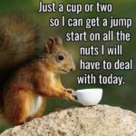 Clever Clever Squirrel Jump Quotes Tumblr