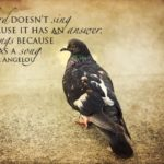 Cute Bird Sayings