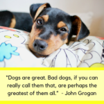 Cute Funny Dog Quotes Twitter