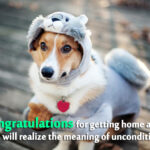 Dog Adoption Anniversary Quotes Pinterest