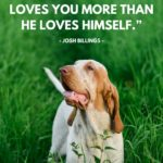 Dog Bond Quotes Tumblr