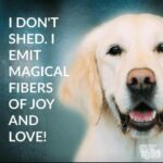 Dog Hair Quotes Facebook