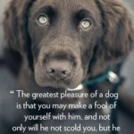 Dog Is My Best Friend Quotes Tumblr