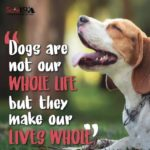 Dog Life Quotes Twitter