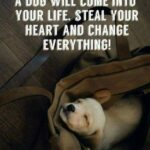 Dog Love Quotes For Instagram Twitter