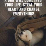 Dog Love Quotes Twitter