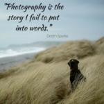 Dog Photography Quotes Pinterest