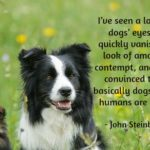 Dogs Eyes Quotes Twitter