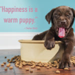 Faithful Dog Quotes Facebook