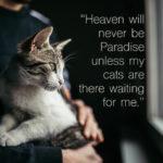 Famous Cat Quotes Pinterest