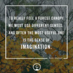 Famous Quotes About Trees Pinterest