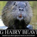 Funny Beaver Sayings Pinterest