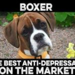 Funny Boxer Dog Pictures With Sayings Tumblr