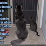 Funny Cat And Dog Pictures With Captions