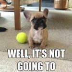 Funny Dog Images With Captions Pinterest