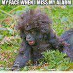 Funny Gorilla Quotes