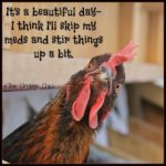 Funny Rooster Quotes Tumblr