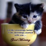 Good Morning Quotes With Cat Images