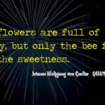 Honey Bee Quotes Facebook