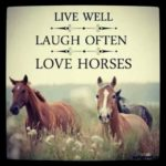 Horse Quotes And Sayings Pinterest