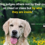 Hunting Dog Quotes And Sayings Pinterest