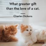 Instagram Captions About Animals Pinterest