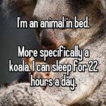 Koala Quotes Tumblr