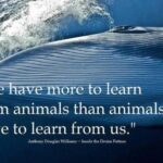 Learn From Animals Quotes Twitter