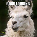 Llama Sayings Funny