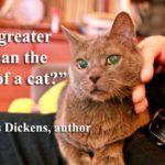 Love My Cat Quotes Facebook