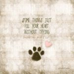 Love Your Dog Quotes Pinterest