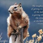 Mark Twain Quotes Squirrel Facebook