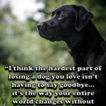 Missing Your Dog Quotes