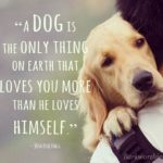 Pet Best Friend Quotes Facebook