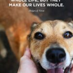 Puppy Quotes And Sayings Tumblr