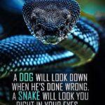 Python Snake Quotes Facebook