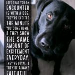 Quotes About A Dog's Love Twitter