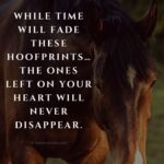 Quotes About Losing A Horse Facebook