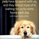 Quotes About Your Dog Being Your Best Friend Pinterest