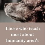 Quotes For Dogs And Humans