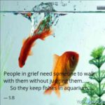 Quotes For Fish Lovers Facebook