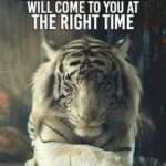 Quotes On Tigers Attitude Twitter