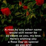 Rose Day For Singles Pinterest